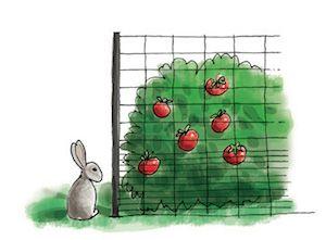 Illustration of rabbit outside garden fence.
