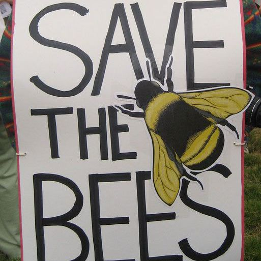 pro-bee poster