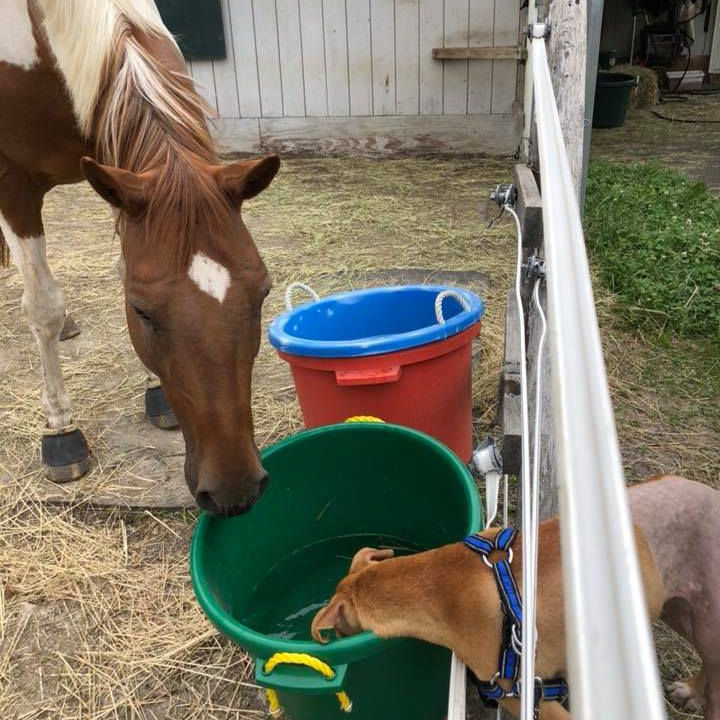 Bo drinks water with horse