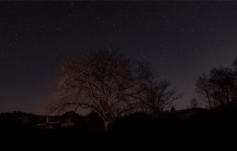 Trees against a starry night sky