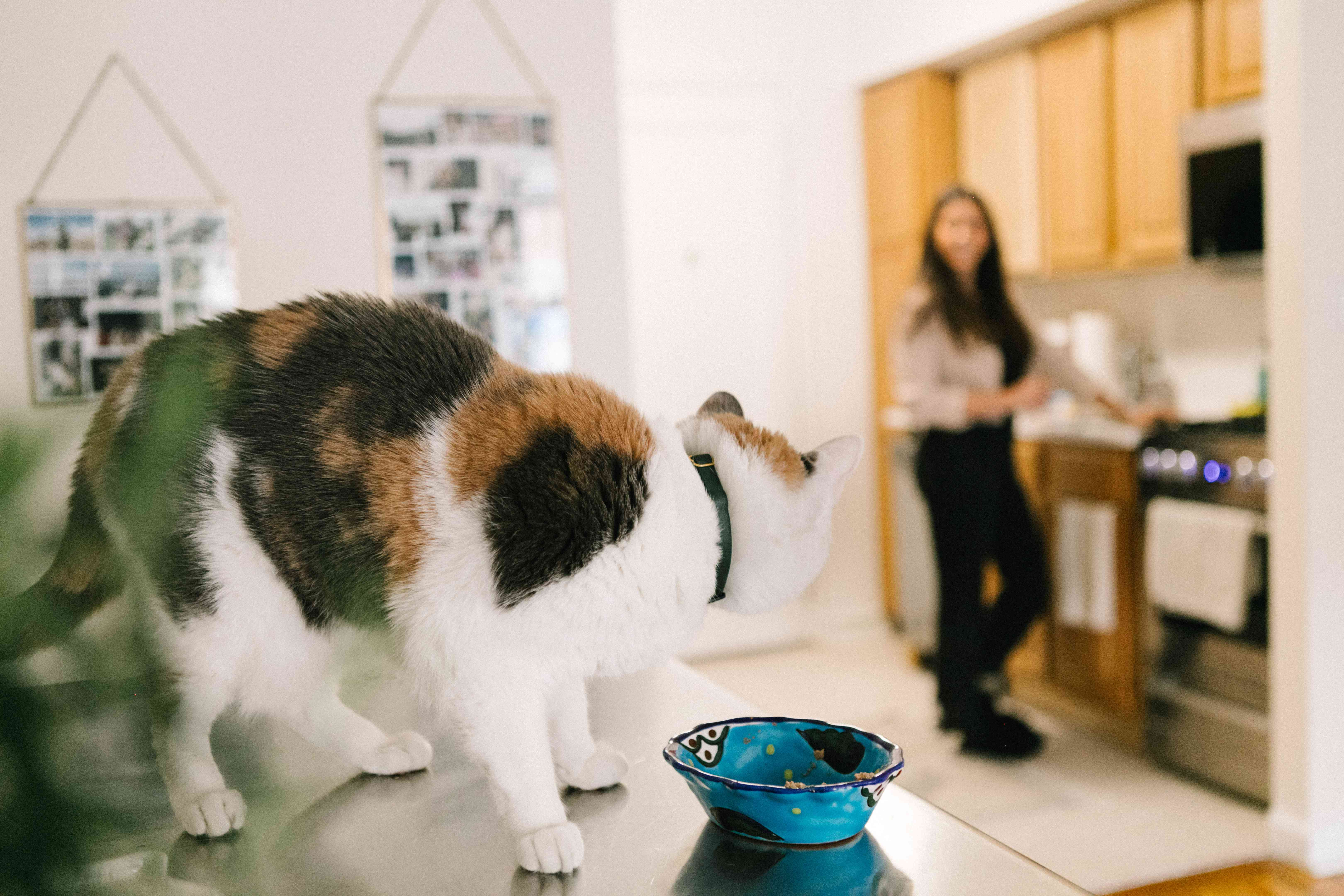 cat perches on table next to empty food bowl and stares at owner in distance