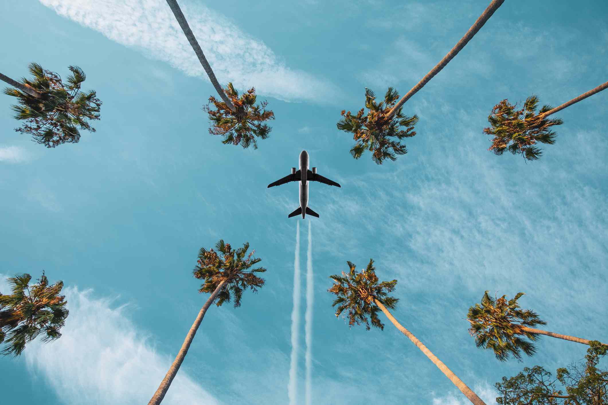 Airplane flying above palm trees, leaving vapor trails