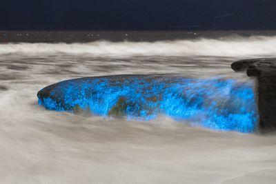 Bioluminescent algae blooms in San Diego.