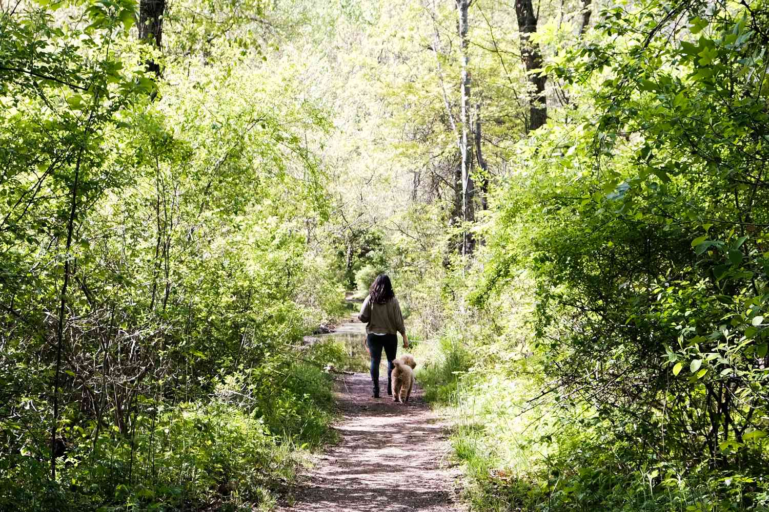 woman and doodle dog walk away down shady forest dirt path