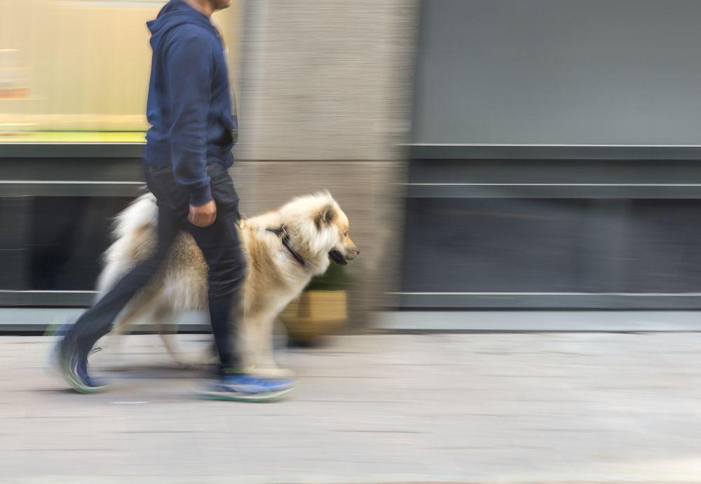 man walking dog downtown