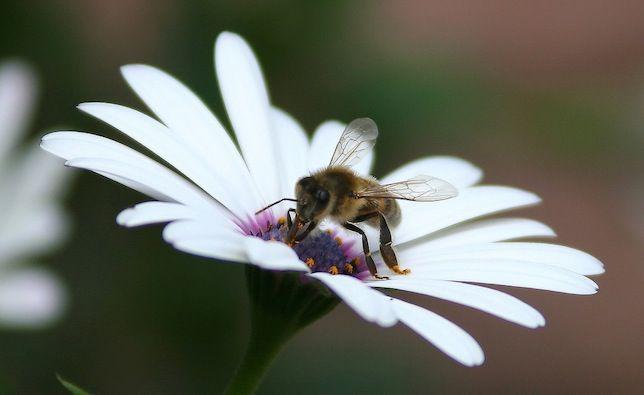 Es un mal momento para ser abeja, pero no tiene por qué serlo