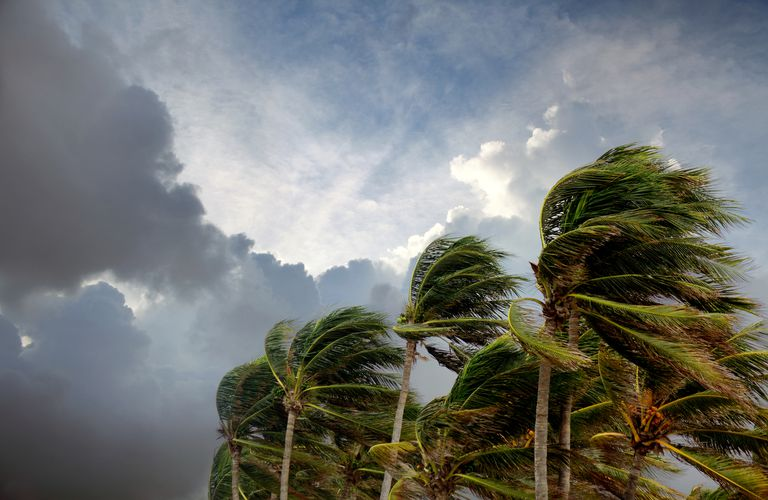 Tropical cyclone sky and palm trees in wind