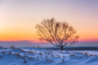 A lone, bare tree in Winter with snow on the ground at sunset