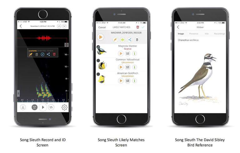 Es como Shazam para los pájaros: ID de la aplicación Song Sleuth Aves por su canción
