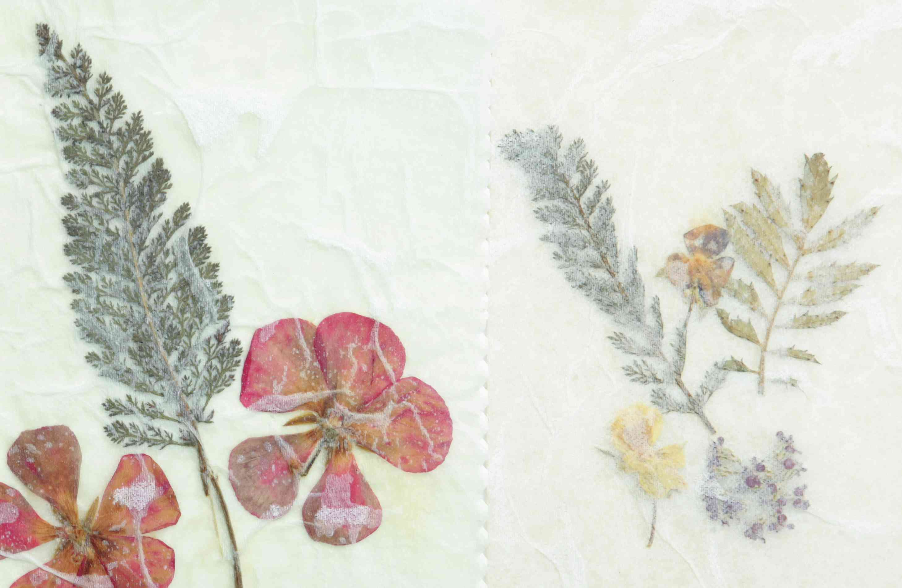 Dried pressed flowers parchment paper
