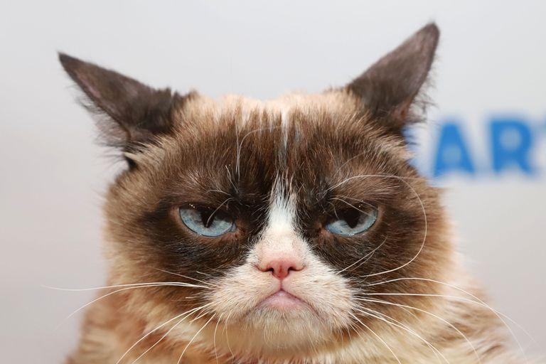 'Grumpy Cat' no estaba tan malhumorado después de todo