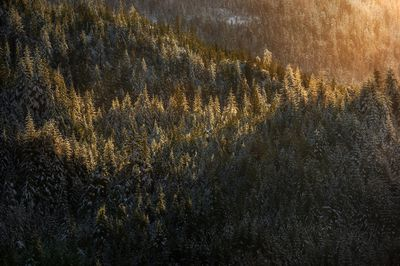 Beautiful later afternoon light bathes the winter forest in the Tongass National Forest.