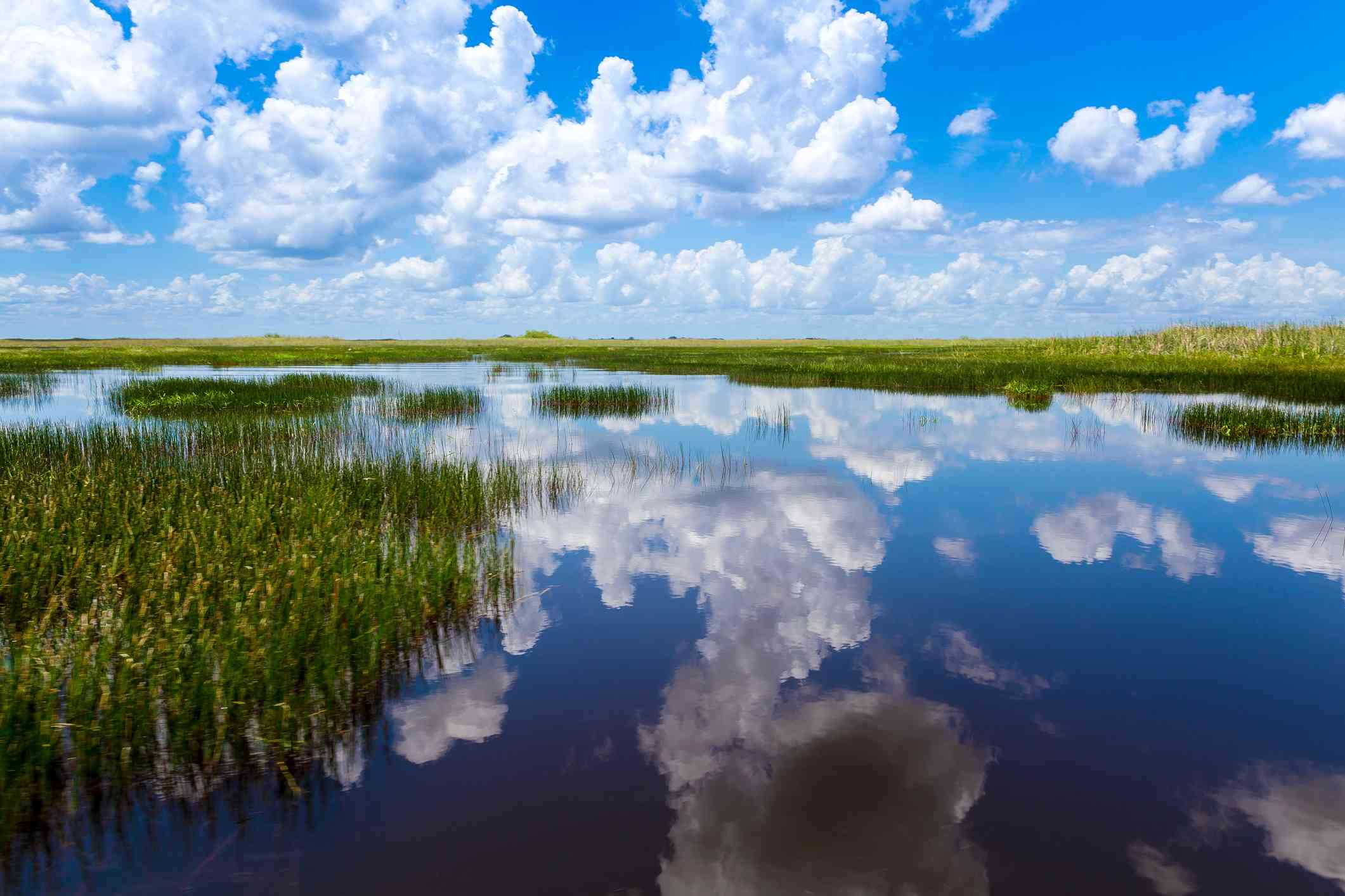 A marsh wetland with blue sky full of puffy clouds reflecting onto the water's surface.
