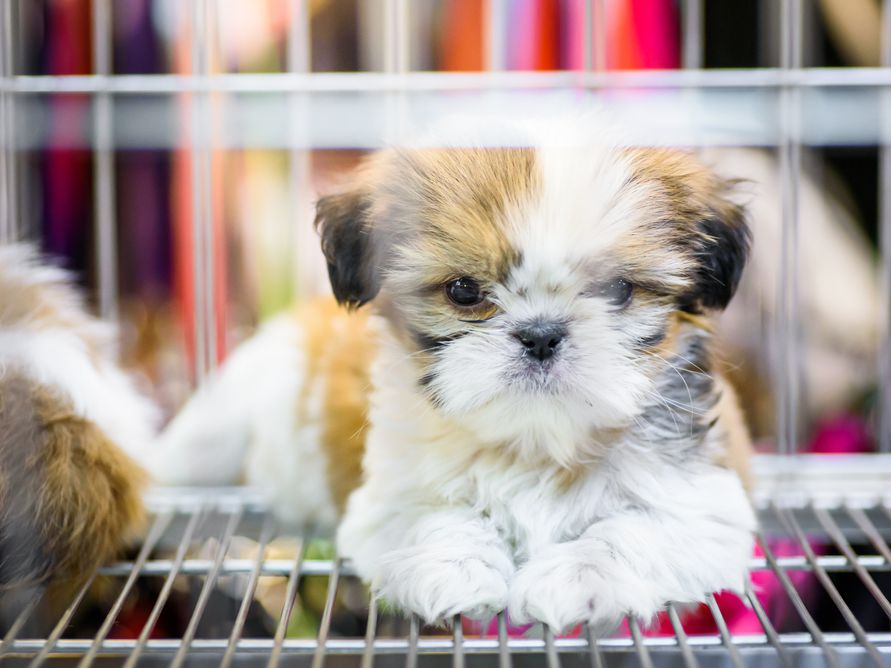 England Aims To Ban Sale Of Puppies And Kittens At Pet Stores