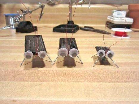 solar cockroach photo