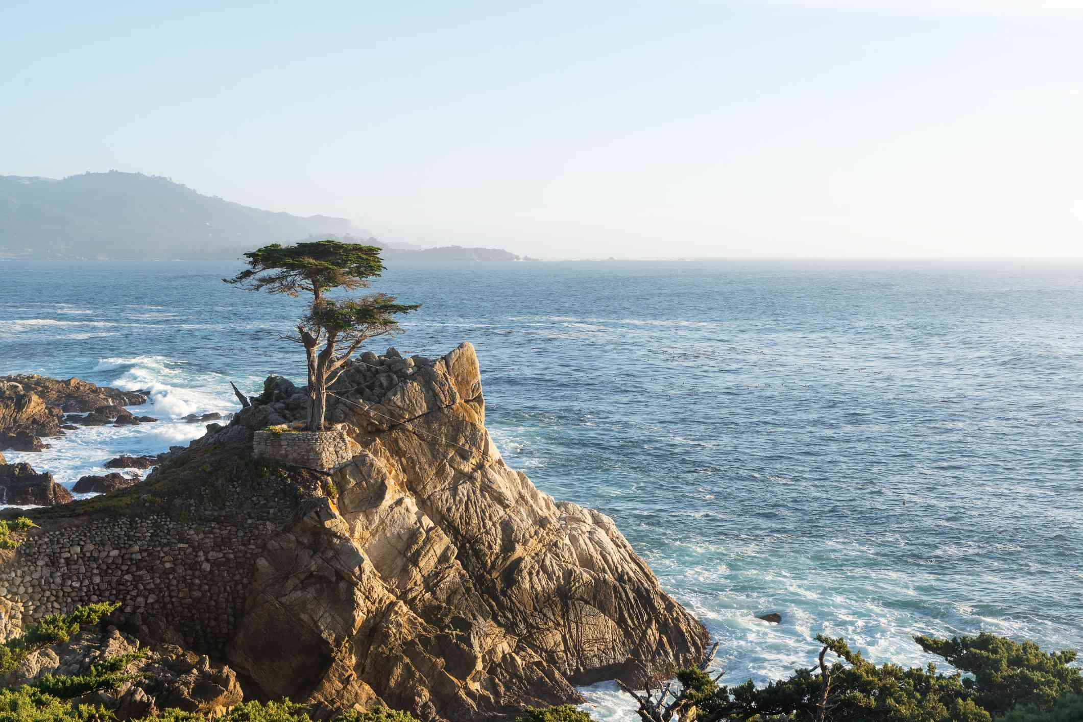 Lone cyprus tree on a cliffside with the ocean in the background