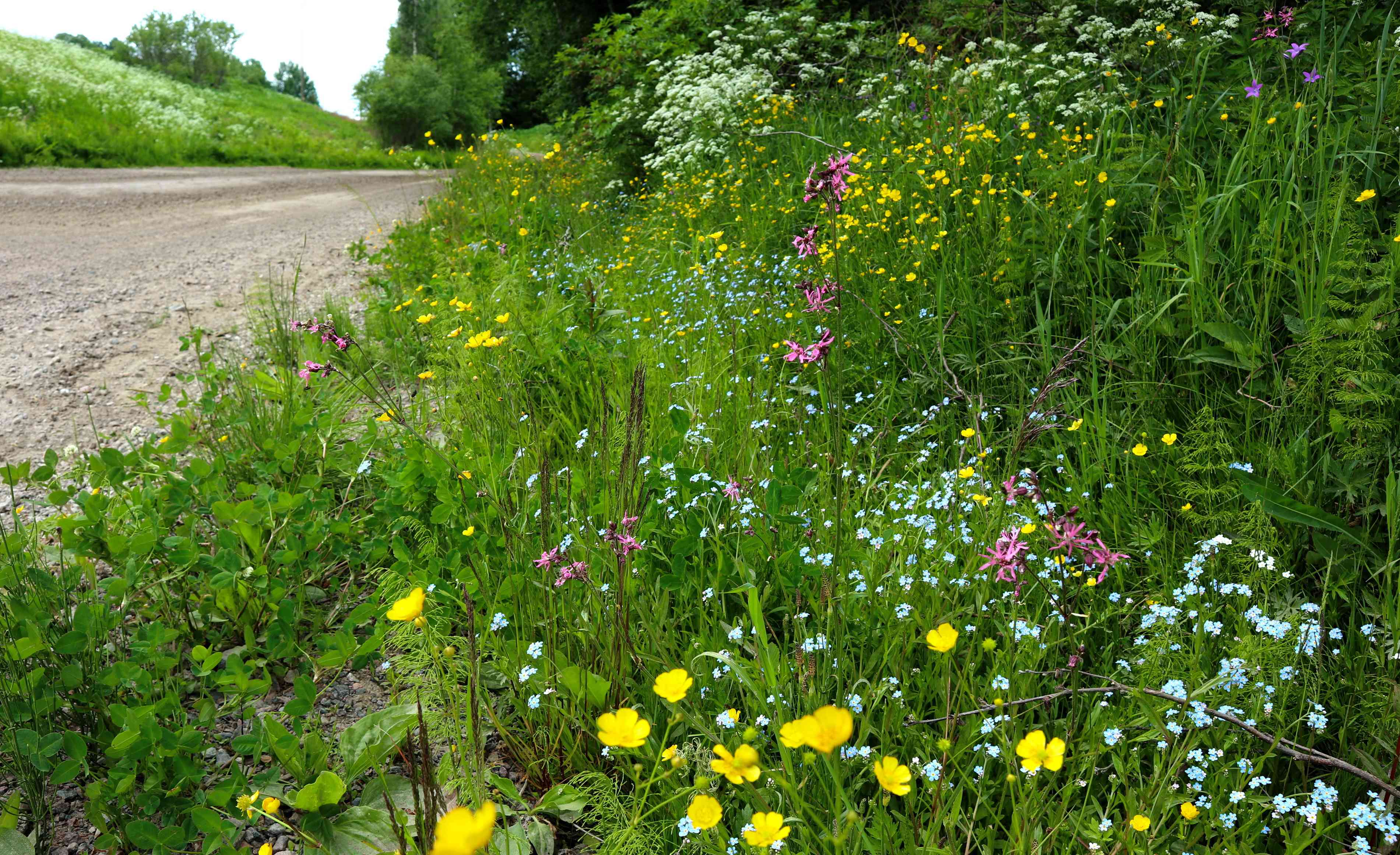 highway right of way with wildflowers
