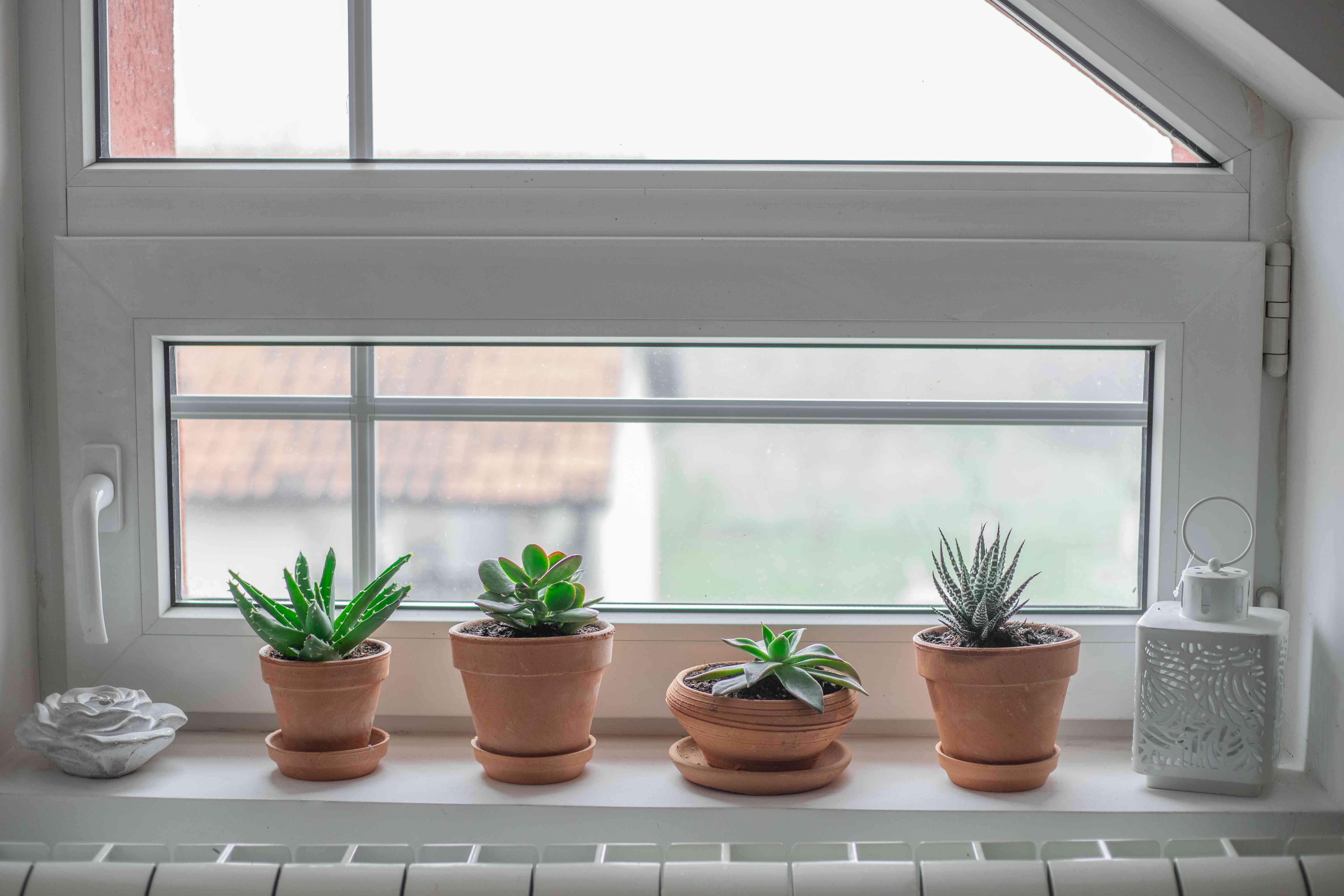 terra cotta pots succulents on white windowsill