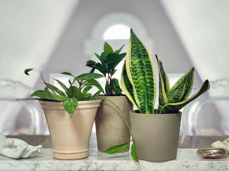 Los beneficios de agrupar plantas de interior