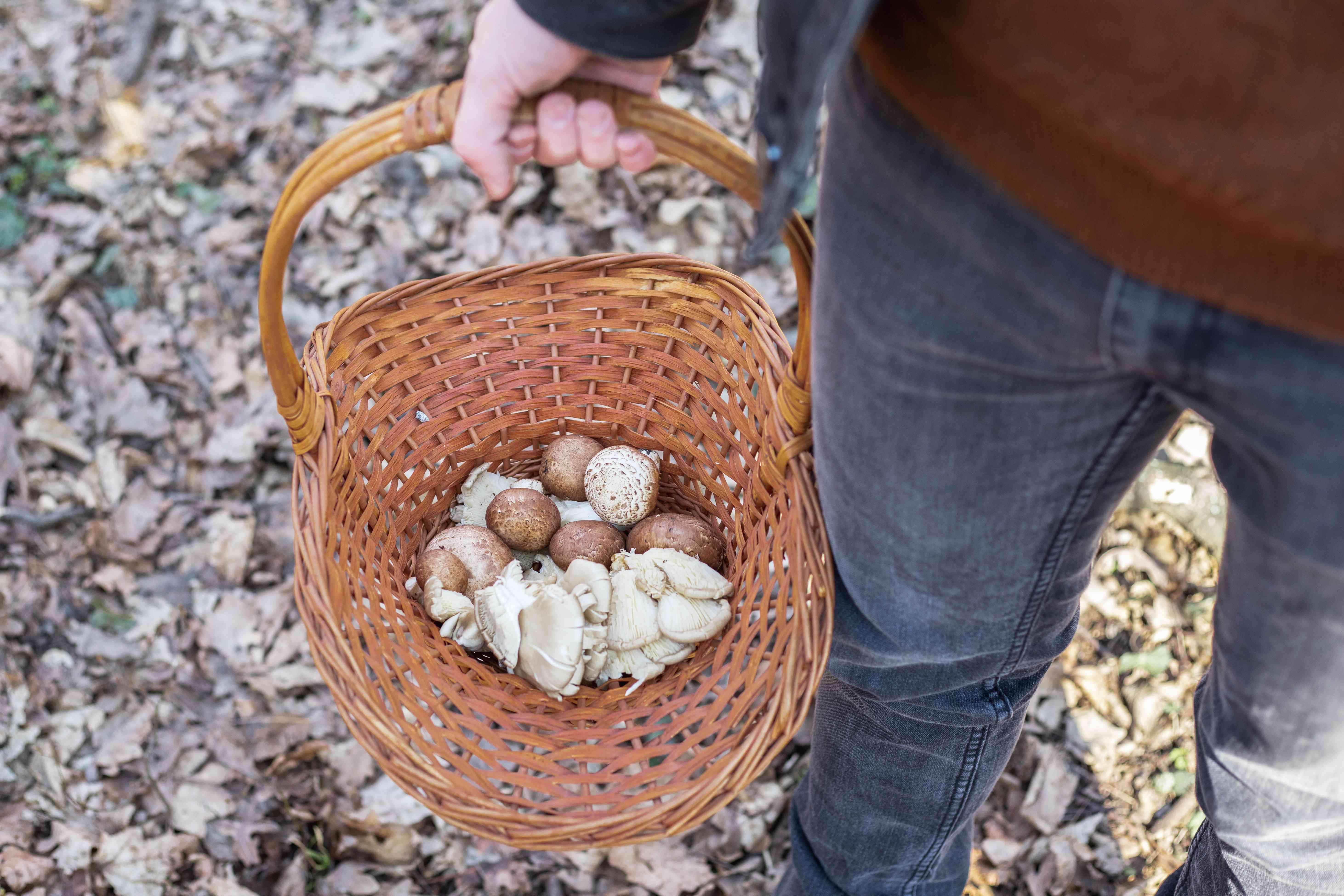 overhead shot of hiker carrying a wicker basket of various mushrooms