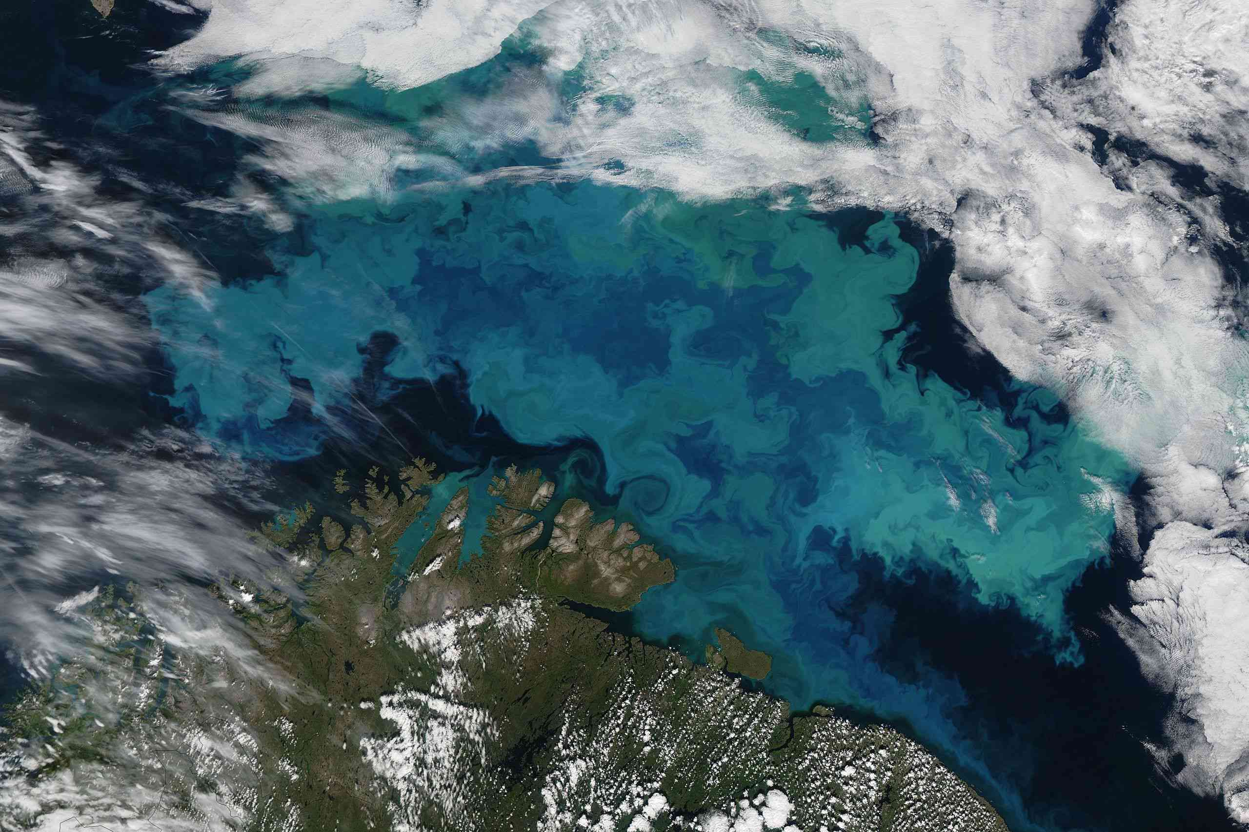 Phytoplankton blooms seen from space