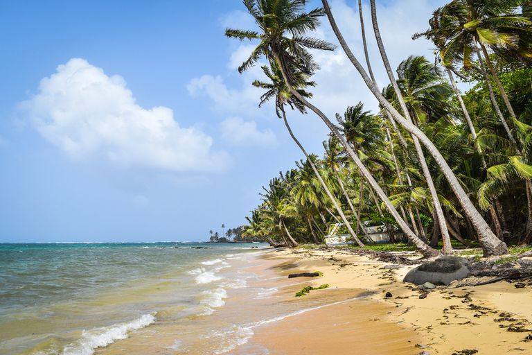 A secluded beach lined with palm trees