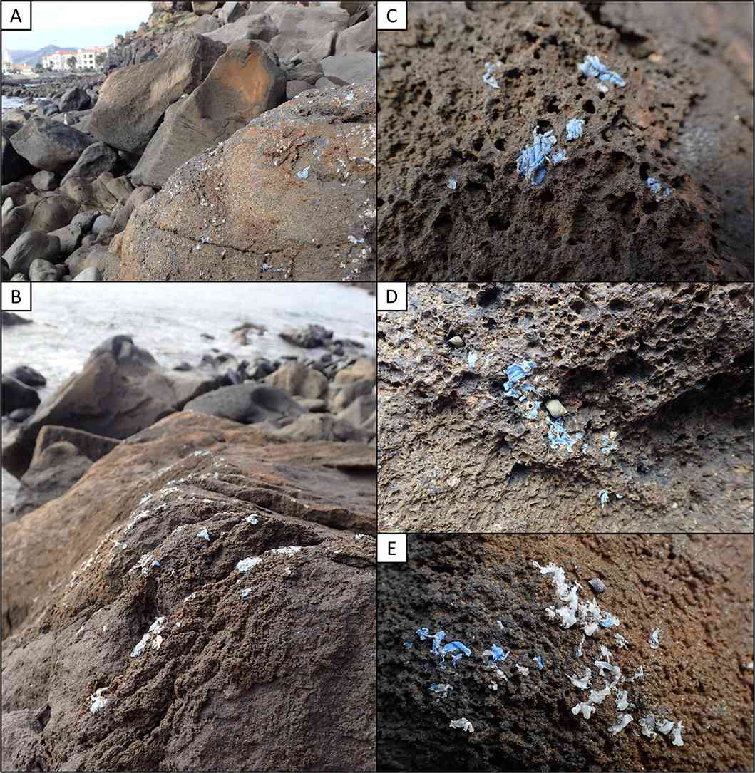 Plasticrust as seen on various rocks.