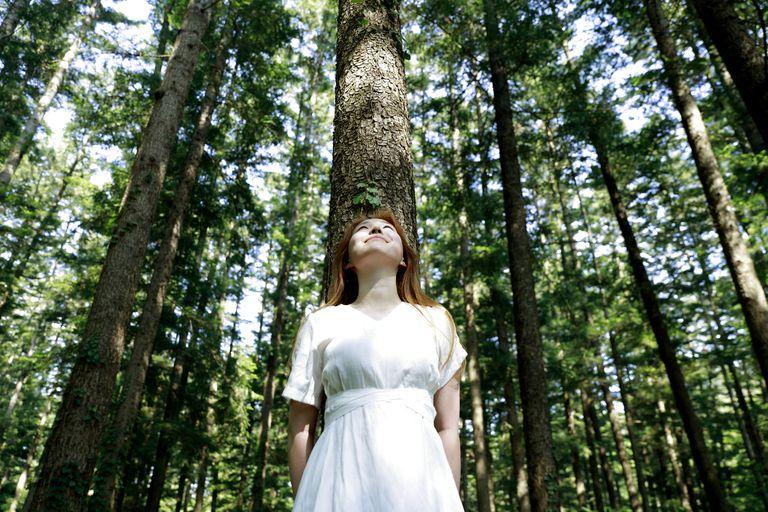 Escuche los bosques de todo el mundo con este mapa sonoro de bosques
