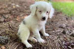 Frankie foster puppy