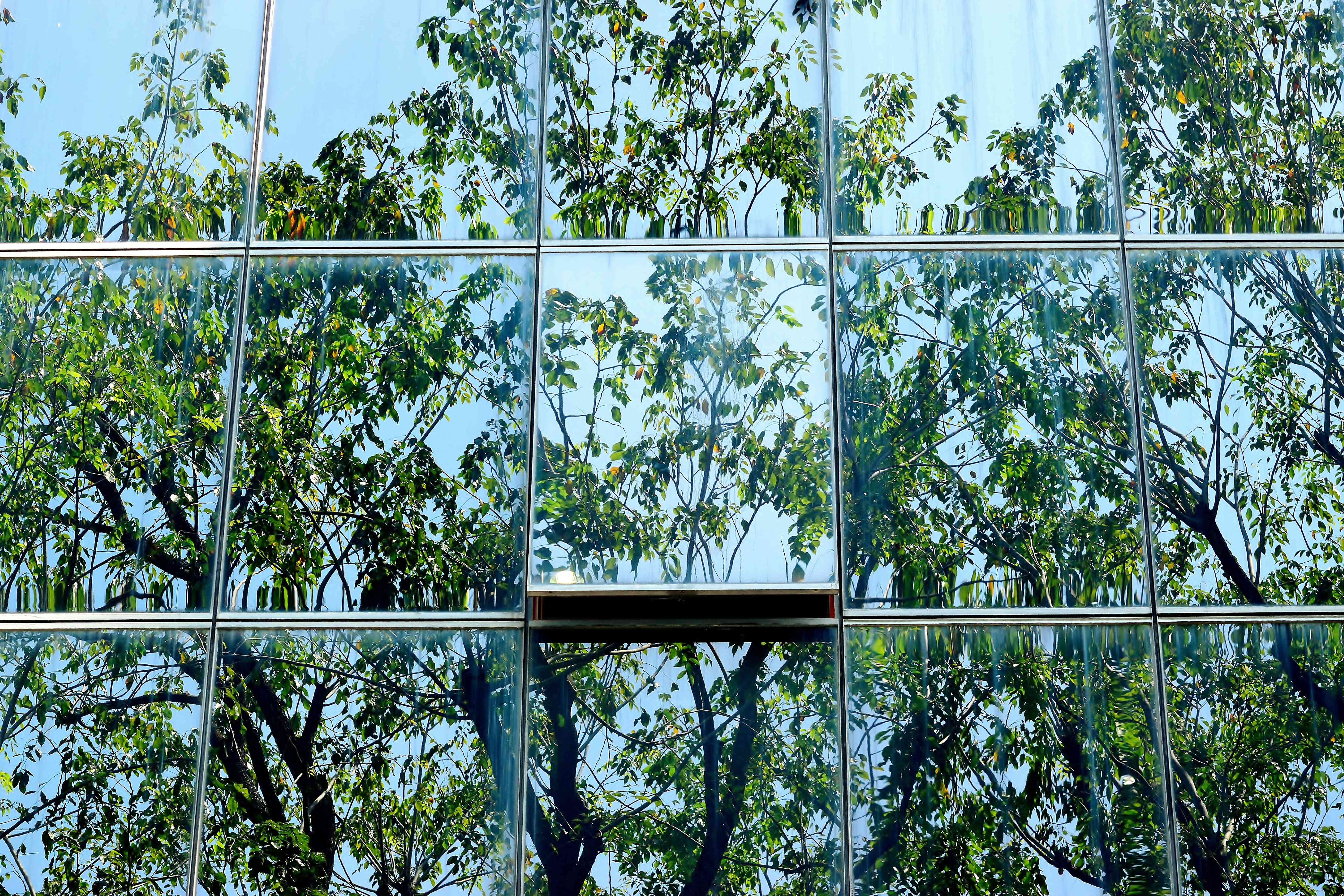 glass building reflecting trees