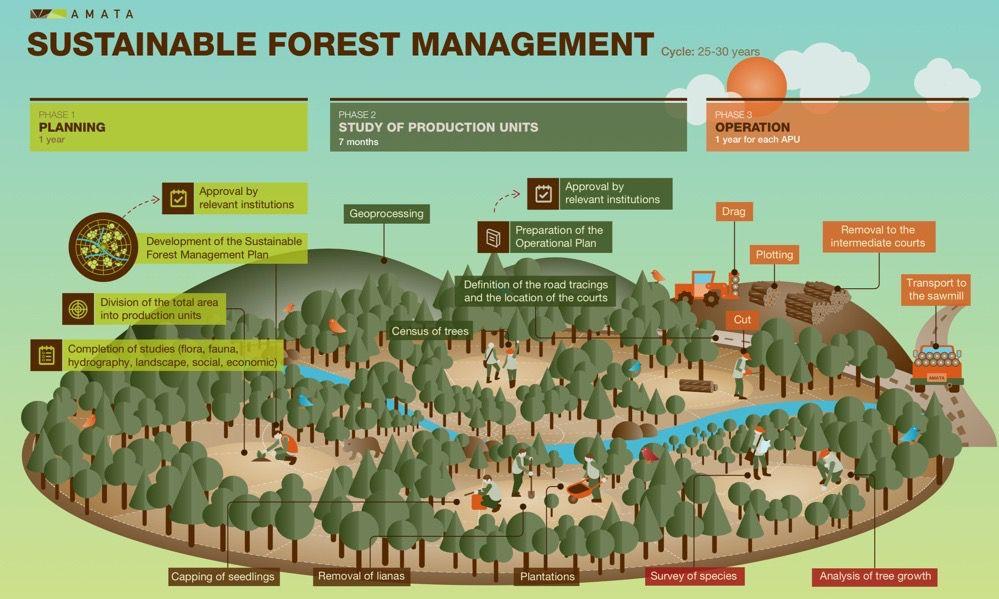 Amata forest