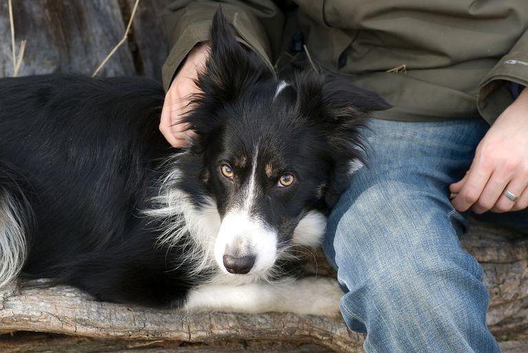 Por qué los perros se ponen alfombras en el pelo
