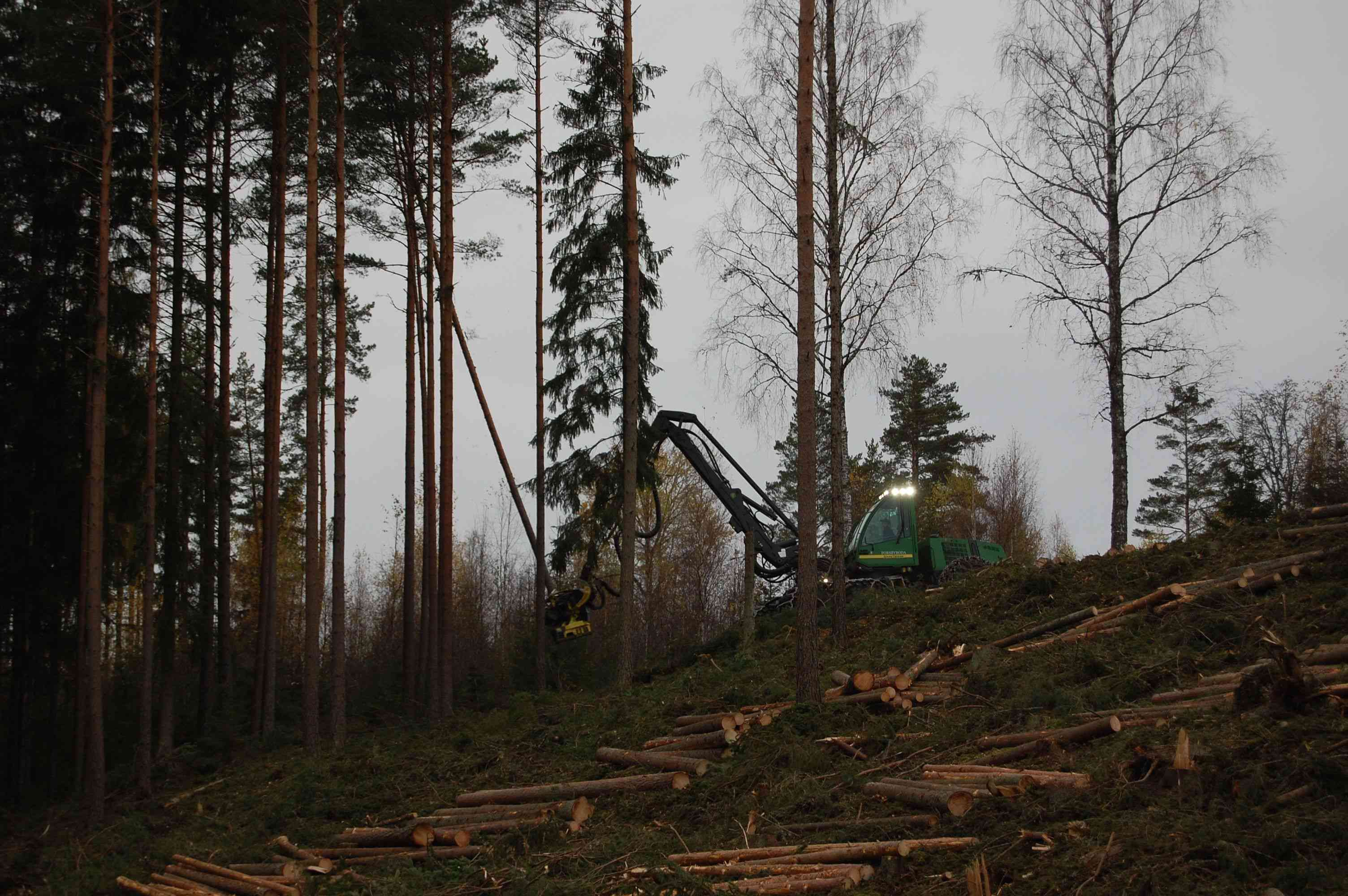 Sustainable forestry being practiced in Sweden