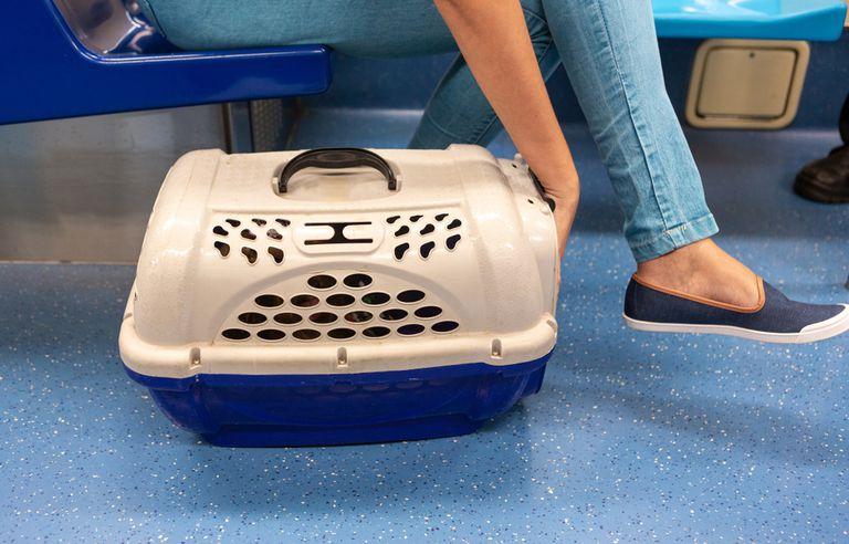 Los neoyorquinos mantienen la calma y continúan en un desafío hilarante a la prohibición de los perros en el metro