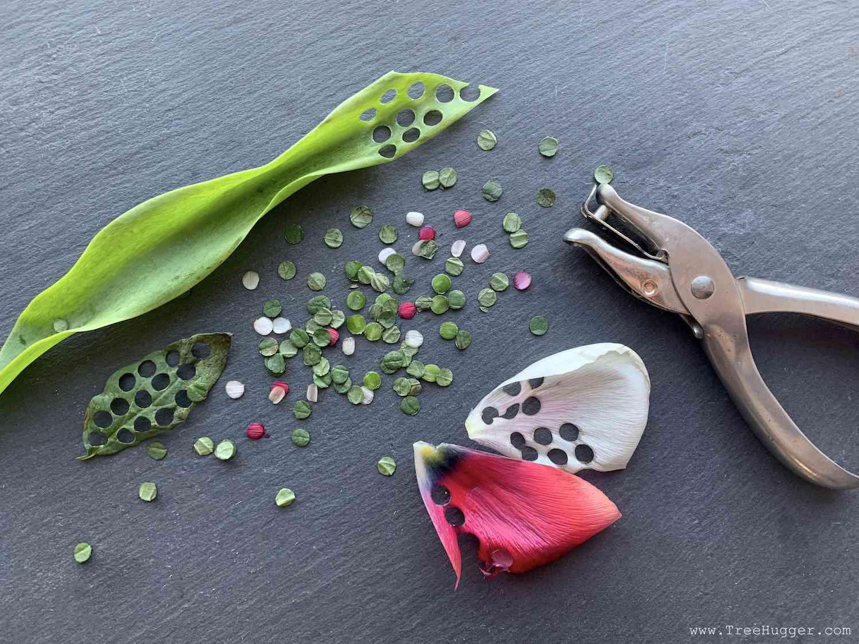 eco-friendly confetti