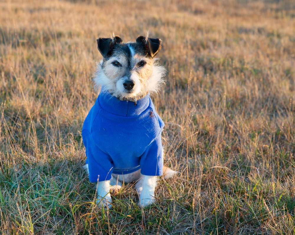 dog wearing clothes