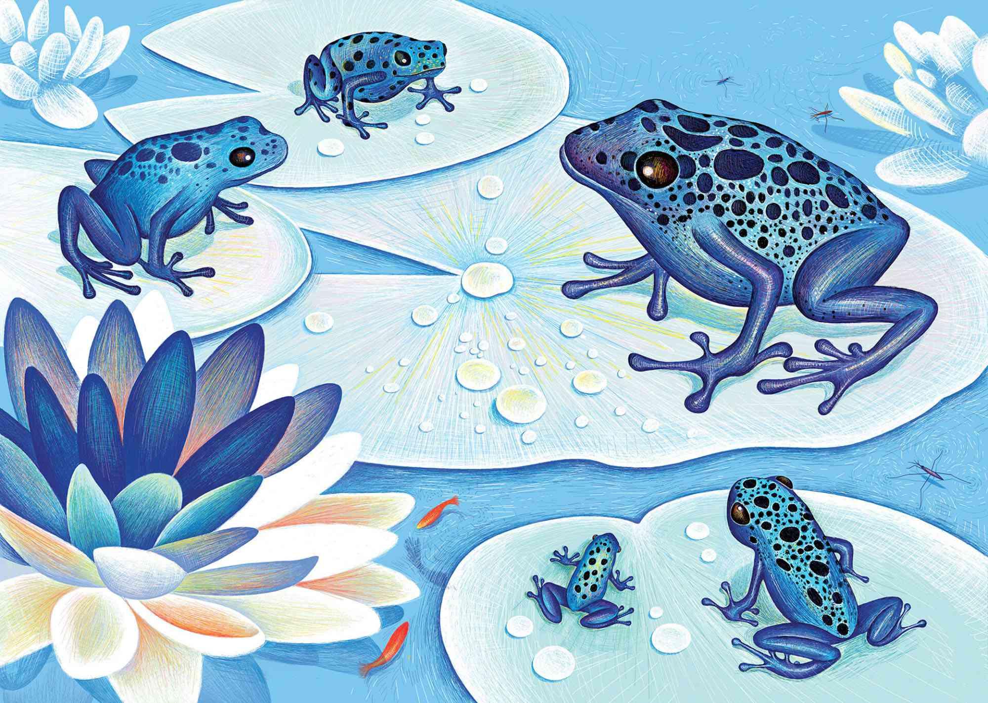 The Blue Hour children's book Isabelle Simler Éditions courtes et longues, 2015
