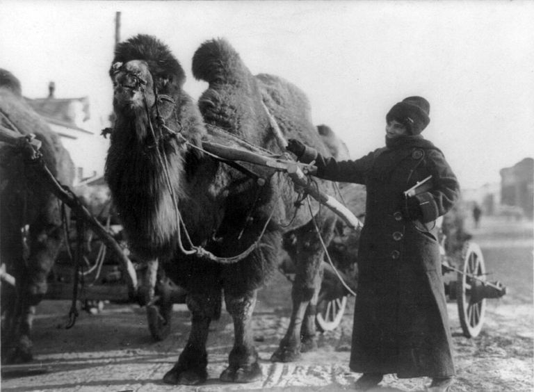 Harriet Chalmers Adams with a camel