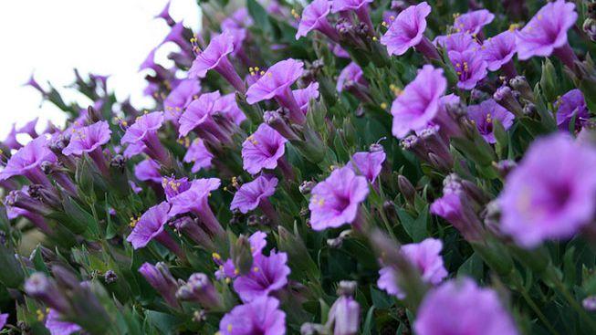 28 Native Plants For Your Moonlight Garden,Grey Tile Effect Vinyl Flooring Bathroom