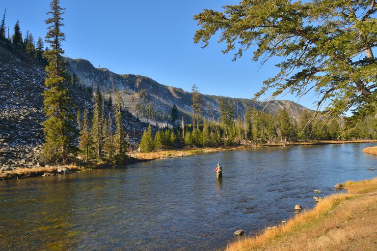 Man fly fishing in the middle of a stream surrounded by mountains and tall green trees on the Yellowstone River at Yellowstone National Park.