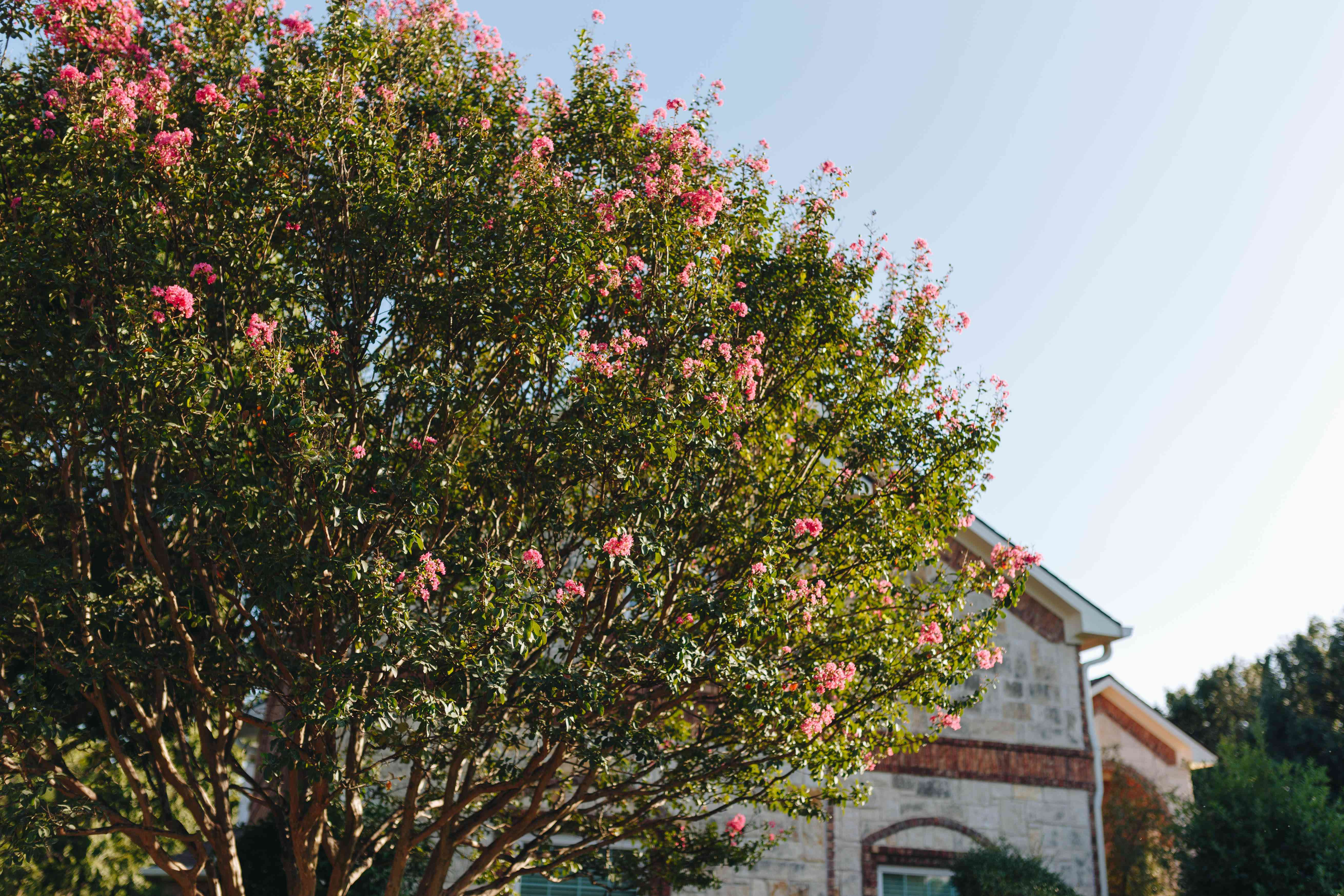 10 Great Trees For Small Yards