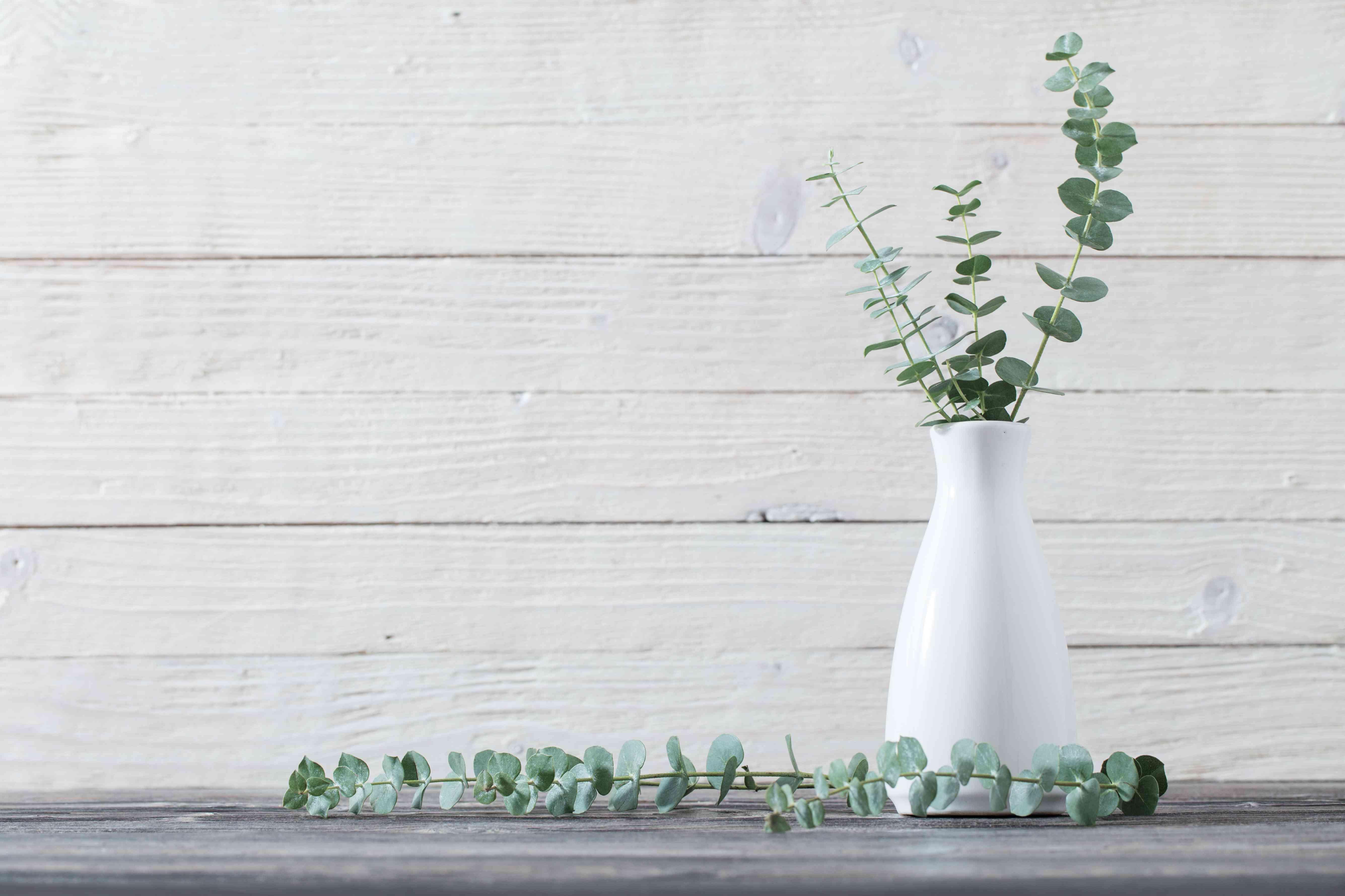 eucalyptus twigs in vase on white background