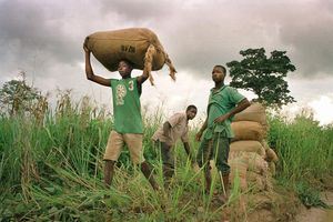 young workers on cocoa farm in West Africa