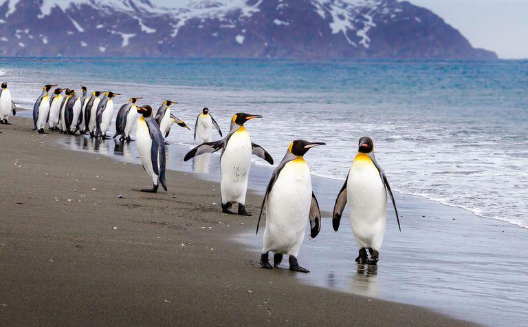 Penguins on an Antarctic beach