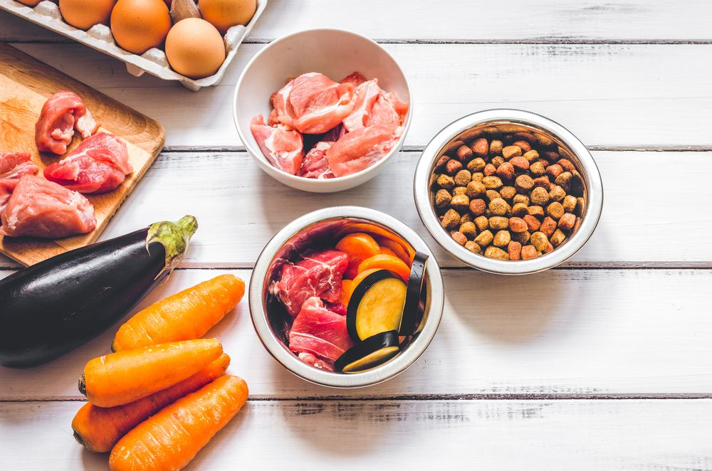 dog food and fresh ingredients