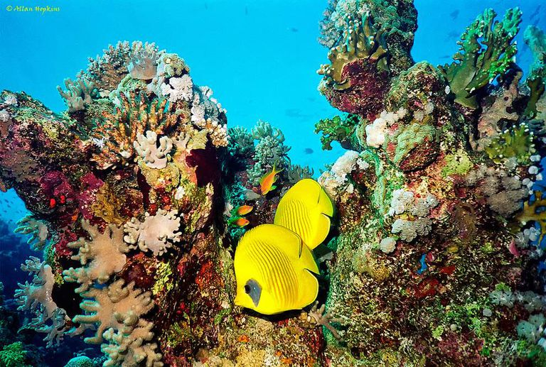 Coral and marine life underwater
