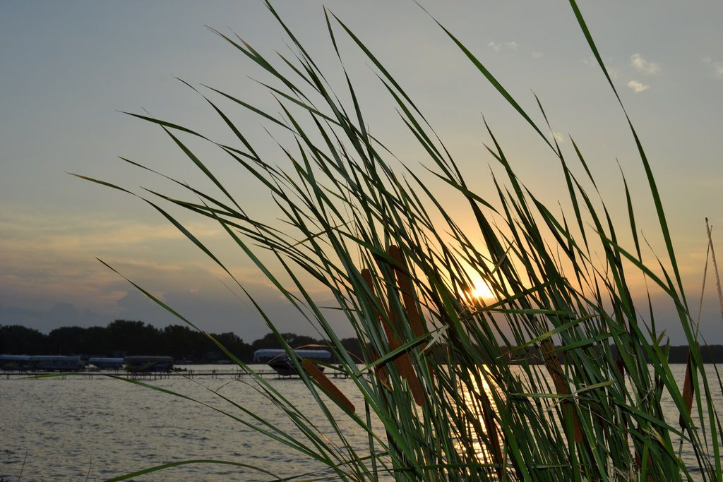 Clear Lake, Iowa at sunset with green plant in foreground