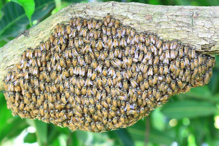Por qué esta colmena de abejas está haciendo 'The Wave'