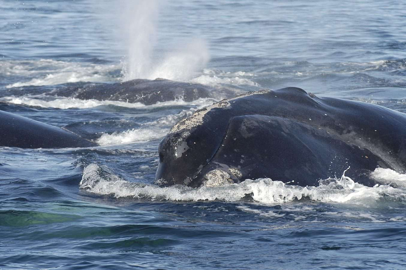 comet whale
