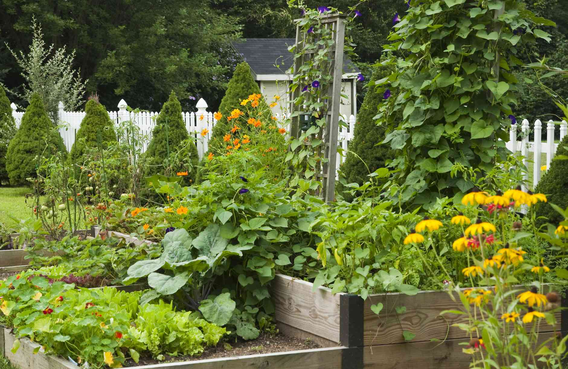 vegetable and flower garden with a white picket fence